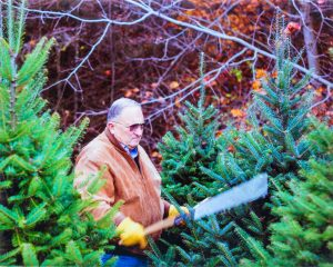 Tom_Lenderink Trimming Pine Trees
