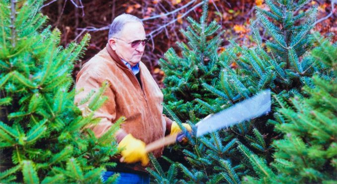 Tom_Lenderink Trimming Pine Trees