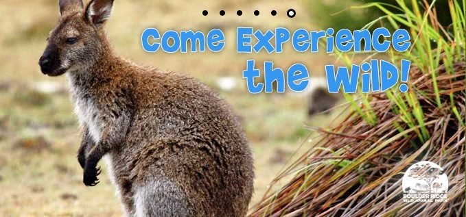 Boulder Ridge Wild Animal Park